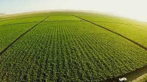 Cómo reducir el impacto ambiental del sector agroalimentario.